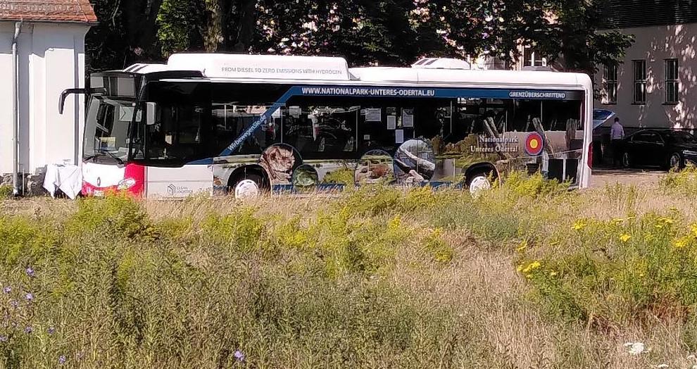 Der erste seiner Art in Europa: Wasserstoffbus fährt auf Nationalpark-Buslinie
